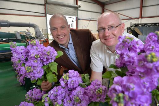 From left, John Hood of Invest NI and Shane Donnelly from Greenisland Flowers admire the scented stock at the company's Portadown premises