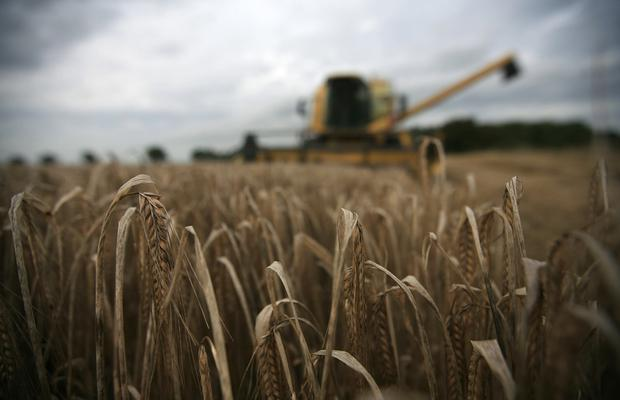 A farmer harvests a crop of barley