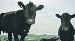 """The NI Affairs Committee warned that a post-Brexit deal between the EU and World Trade Organisation would be """"hugely damaging"""" to farmers in Northern Ireland."""