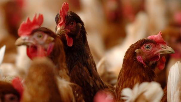 2 Sisters supplies a third of all poultry consumed in the UK