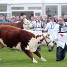 The Balmoral Show is an excellent showcase for the best in what Northern Ireland has to offer European markets