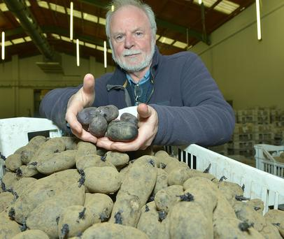 Paul Watts, potato breeder with AFBI