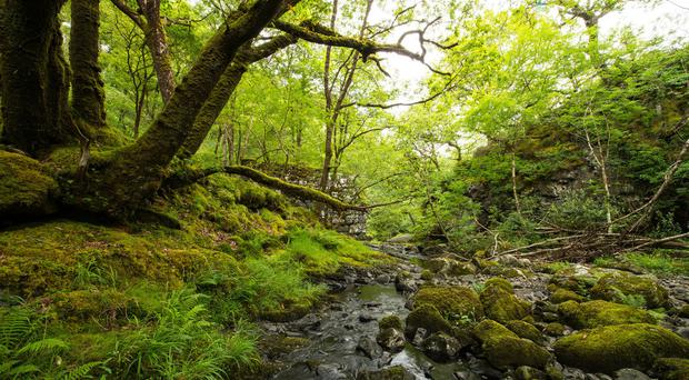 Ancient woodland is irreplaceable, Natural England warns