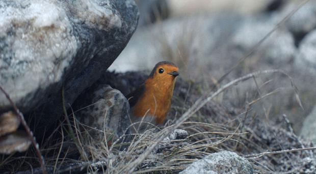 The Waitrose ad features an epic tale of a robin's homecoming to a UK garden and a crumb of mince pie