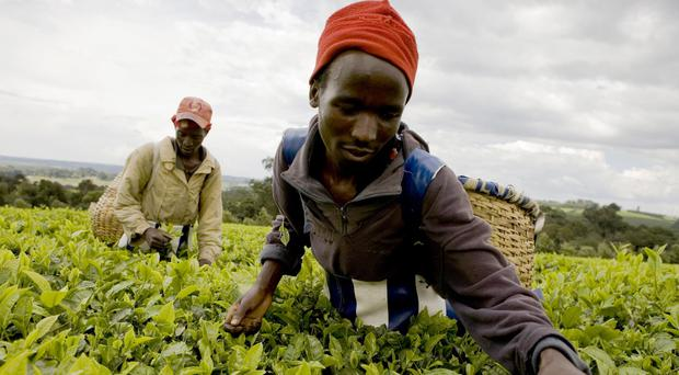 One in three people in Kenya's coffee and tea-growing regions live in poverty (Co-operative Group/PA)
