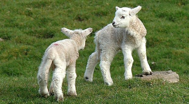 Kuwait imposed a ban on UK lamb over concerns around the degenerative disease scrapie