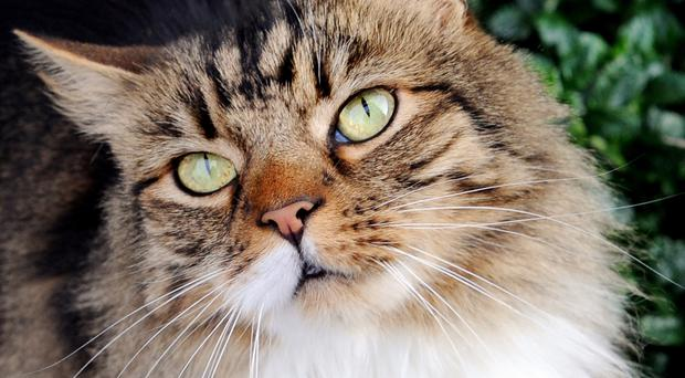 Pet owners are less likely to insure cats than dogs, figures have shown