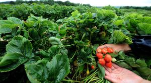 Agriculture depends on an available labour market, domestic and foreign, MPs said