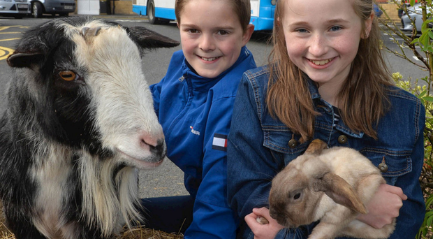 Sam Geary and Judith Duncan join a couple of four-legged friends to announce Translink's special transport plans for Balmoral Show