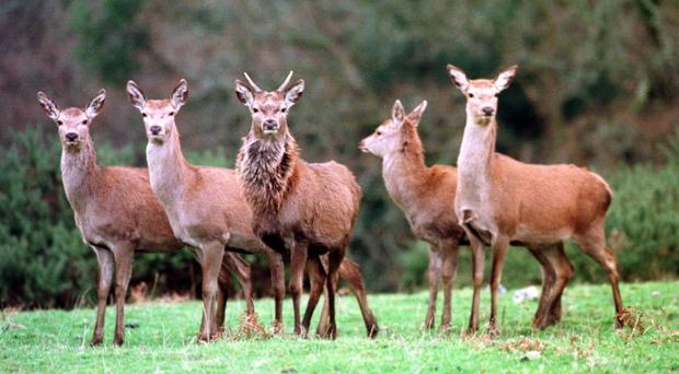 Demand for venison is outstripping supply