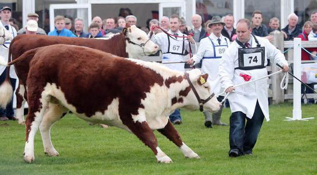 The Balmoral Show is at Balmoral Park outside Lisburn from May 16-19