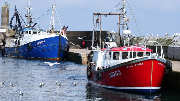 Trawlers in harbour at Portavogie