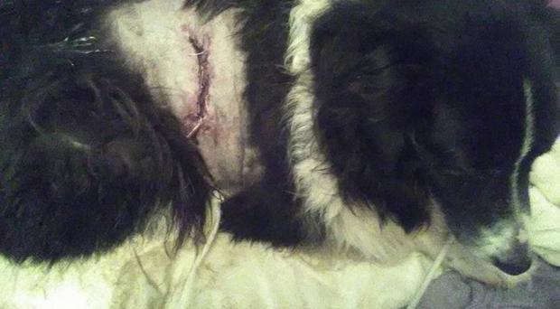 Rosemary Brady's dog Alfie was badly injured on Aghory Road near Richhill