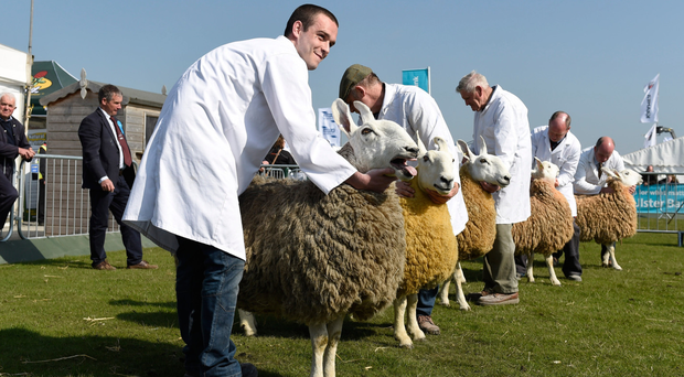 The Balmoral Show has continued to thrive throughout its long history
