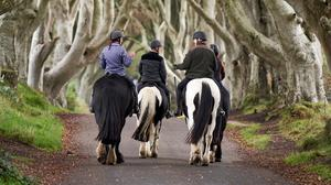 In doubt: A group horse riding at the Dark Hedges made famous by Game of Thrones. Credit: PA