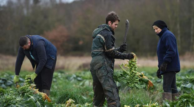 About 36% of firms in the food and farm industry would see their business models fail if they could not hire EU nationals, a report said