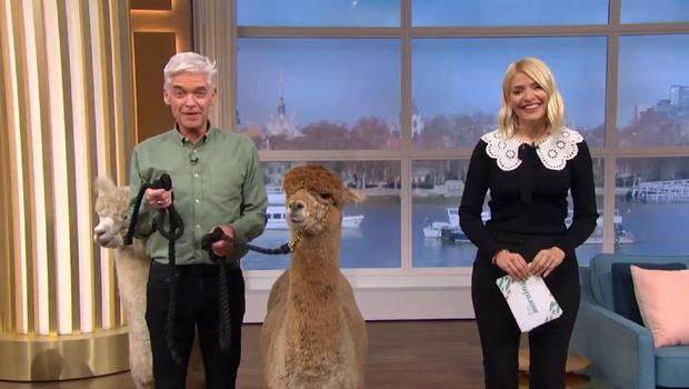 This Morning welcomed two alpacas (ITV/PA)