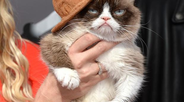 Grumpy Cat will star in his own Christmas film