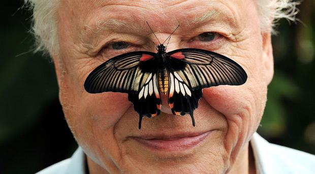 Sir David Attenborough (John Stillwell/PA)