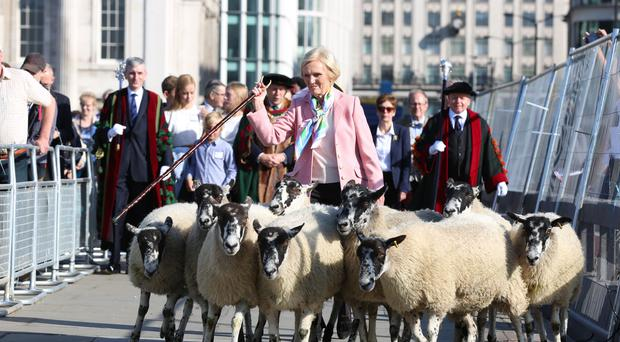Mary Berry herds sheep in London