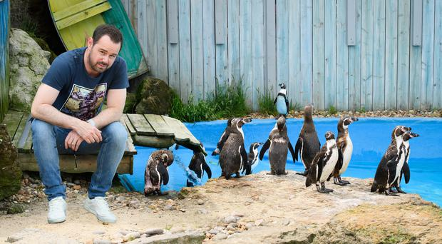 Danny Dyer is to narrate a penguin Love Island spoof (Chessington World of Adventures Resort/PA)
