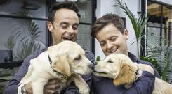 Ant and Dec with the guide dog puppies named after them (Christopher Ison/Guide Dogs/PA)