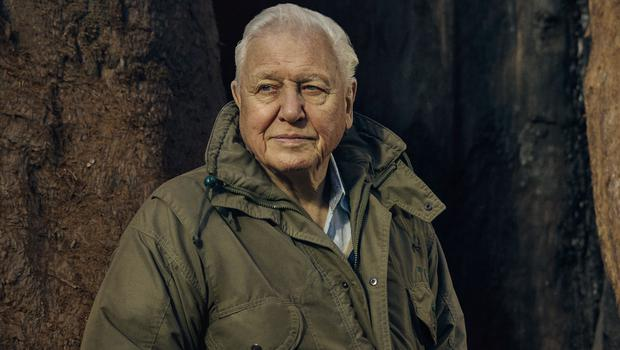 The Green Planet with Sir David Attenborough (Sam Barker/BBC)