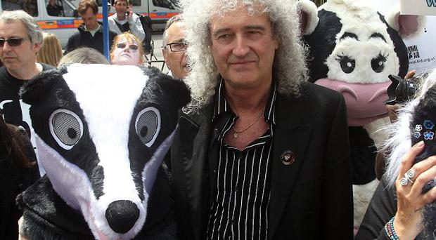 Brian May's most recent collaborations have been part of his campaign against the planned badger cull