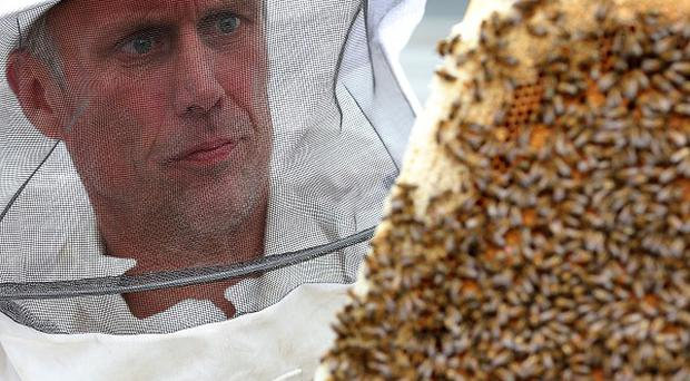 Bez, former member of the Happy Mondays, holds a tray of honey