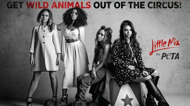 Undated handout photo issued by Peta of the all-girl group Little Mix as they appear in the animal rights group ad campaign calling for the end of wild animals in circuses.
