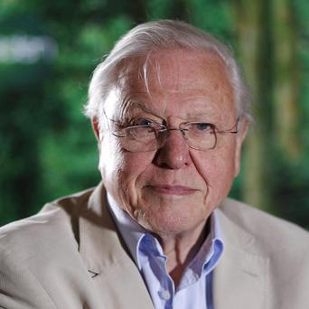 Sir David Attenborough said the BBC was 'going through a bad patch'