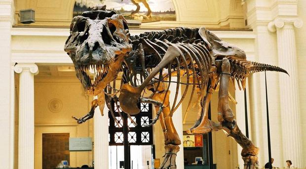 The dimensions and proportions of the model built for T. rex Autopsy were based on CT scans of the bones of T. rex specimen Sue (PA/University of Manchester)