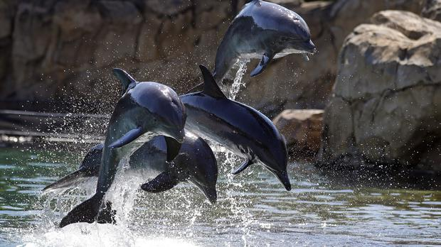 Giving birth surrounded by dolphins is one of the more exotic lifestyle choices featured in Posh Births