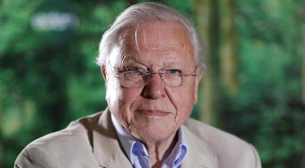 Sir David Attenborough will provide the voice-over for The Hunt