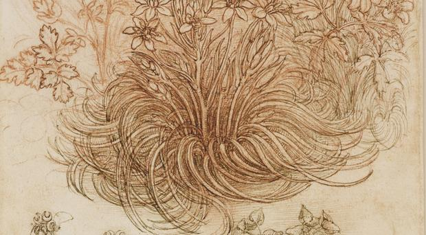 Leonardo da Vinci's A Star-of-Bethlehem And Other Plants (c.1506-12), (Royal Collection Trust)