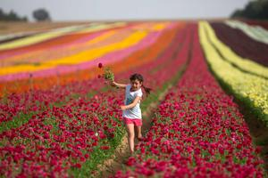 An Israeli girl picks Ranunculus flowers in a cultivated field in the southern Israeli Kibbutz of Nir Yitzhak, located along the Israeli-Gaza Strip border, on April 20, 2015. The flower bulbs will be mostly exported to Europe. AFP/Getty Images