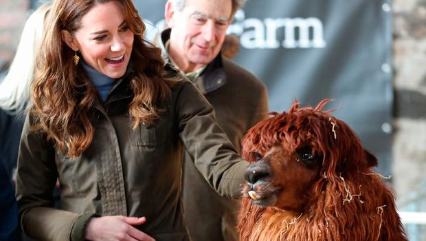 NEWTOWNARDS, NORTHERN IRELAND - FEBRUARY 12: Catherine, Duchess of Cambridge has an encounter with an Alpaca during a visit to The Ark Open Farm on February 12, 2020 in Newtownards, Northern Ireland. This visit is part of her Early Years Foundation Survey. Five Big Questions, aiming to spark a UK-wide conversation on early childhood. (Photo by Chris Jackson/Getty Images)
