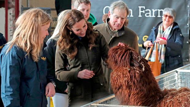 The Duchess of Cambridge strokes an alpaca during a visit to The Ark Open Farm, at Newtownards, near Belfast, where she is meeting with parents and grandparents to discuss their experiences of raising young children for her Early Childhood survey. PA Photo. Picture date: Wednesday February 12, 2020. See PA story ROYAL Kate. Photo credit should read: Liam McBurney/PA Wire
