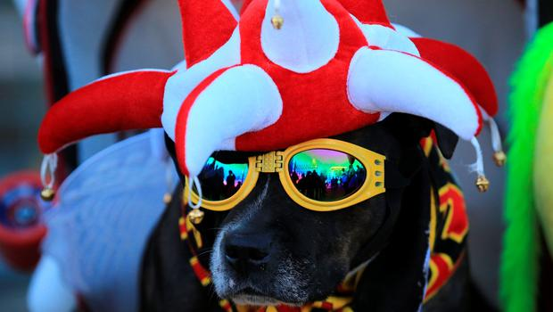 LIVERPOOL, ENGLAND - APRIL 27: A dog is dressed in Liverpool team colours outside Liverpool's Saint George's Hall as thousands of people gather to attend a vigil for the 96 victims of the Hillsborough tragedy on April 27, 2016 in Liverpool, England. The civic commemoration event marks the outcome of the fresh inquests into the 1989 Hillsborough disaster, in which 96 football supporters were crushed to death, and concluded yesterday with a verdict of unlawful killing. Relatives, Liverpool supporters and members of the public are taking part in the vigil at St George's Hall where a candle is lit for each of the 96 victims who lost their lives during a crush at the Hillsborough football ground in Sheffield, South Yorkshire in 1989..  (Photo by Christopher Furlong/Getty Images)