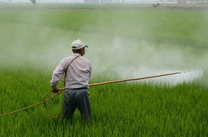 Laws to protect public health such as on pesticide residues on food are at risk after Brexit, researchers warn