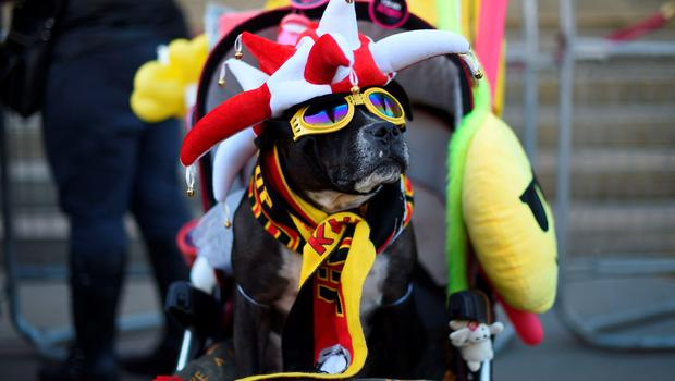 A dog wearing a pair of sunglasses and a liverpool hat and scarf is sat in a pram by St Georges Hall in Liverpool, north west England on April 27, 2016. Thousands of sympathisers were expected to pay an emotional tribute to the Hillsborough disaster victims today after a landmark inquest found that 96 Liverpool football fans were unlawfully killed. / AFP PHOTO / PAUL ELLISPAUL ELLIS/AFP/Getty Images
