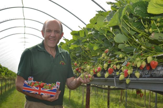 Strawberry grower Phillip Busby, of Busby Partners, at the producer's farm in Chilcote, Leicestershire (Tesco/PA)