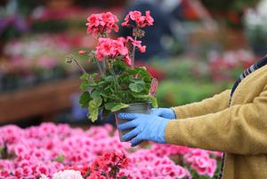 Garden centres will be able to reopen (PA)