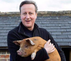 Prime Minister David Cameron: Pic Andrew Parsons PA