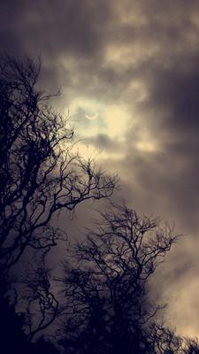 Solar eclipse seen from Tollymore Park in Bryansford. Lorraine Robinson