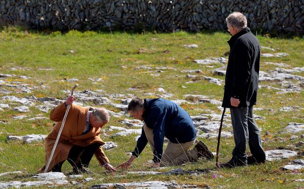 Britain's Prince Charles, Prince of Wales (L) and BurrenBeo Trust Project Manager Brendan Dunford (C) examine the flora during his visit to the Burren, a vast area of limestone rock, at Burren National Park in west Ireland, on May 19, 2015. Prince Charles on Tuesday became the first British royal to meet Irish republican leader Gerry Adams, on a visit that will take him to the scene of his great-uncle's murder by the IRA.  AFP PHOTO / POOL / JOHN STILLWELLJOHN STILLWELL/AFP/Getty Images