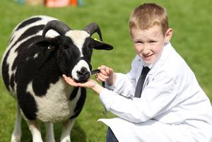 Northern Ireland- 15th May 2014 Mandatory Credit - Photo-Jonathan Porter/Presseye.  Ulster Bank Balmoral Show second day at the Maze site outside Lisburn.    The annual agricultural show attracts local retailers as was as farmers showing raw breeds, horse jumping and big retailers.  Alex Calhoun(10) with his Jacob Sheep of the Kingarrow flock Omagh