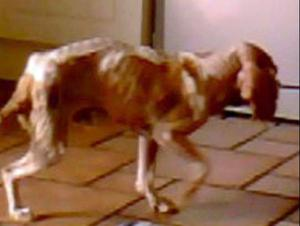 HEARTBREAKING: One of the dogs rescued from Laverty's home