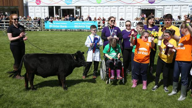 PressEye-Northern Ireland- 16th May 2018-Picture by Brian Little/ PressEye  Riverside Special School pupils Dexter project during the  First day of the 2018 Balmoral Show, in partnership with Ulster Bank, at Balmoral Park  Picture by Brian Little/PressEye