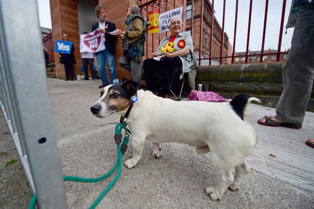 GLASGOW, SCOTLAND - SEPTEMBER 18:  A dog is tied to a railing outside a polling station at Notre Dame primary school on September 18, 2014 in Glasgow, Scotland. After many months of campaigning the people of Scotland today head to the polls to decide the fate of their country.  The referendum is too close to call but a Yes vote would see the break-up of the United Kingdom and Scotland would stand as an independent country for the first time since the formation of the Union. (Photo by Jeff J Mitchell/Getty Images)
